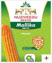 Maize : Mallika – NMH 920 Special Features / USPs      * Long and good girth of cobs     * Attractive orange yellow kernels     * Uniform placement of cobs     * Uniform cob size     * Shelling 80%  Additional Features Plant Height : Tall(230-270cm) Duration : Kharif: 110-115 days, Rabi: 120-125 days Cob placement : Medium (130-135 cms) Grain type and colour : Semi dent, orange yellow Cob : Long cob, medium girth and with good tip filling