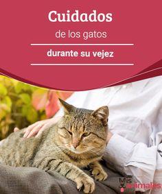 Cuidados de los gatos durante su vejez  En esta ocasión te contamos los cuidados de los gatos durante su vejez. Una etapa en la que se necesitan redoblar las atenciones. #gatos #vejez #cuidados #consejos