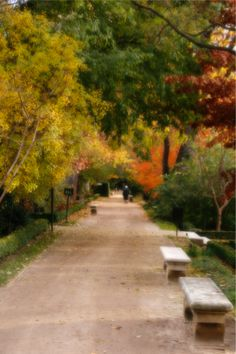 Fotografía de Otoño. Parque El Retiro, Madrid.