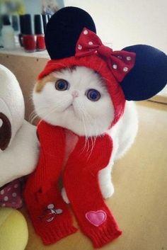 Sulinha Cidad3: Gato Snoopy se torna fenômeno na web - Page Not Found