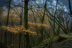 woodland by Nikoletta Kolozs