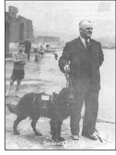 Swansea Jack - October was a famous dog that rescued 27 people from the docks and riverbanks of Swansea, Wales. Swansea Bay, Swansea Wales, Dog Stories, Great Stories, Famous Welsh People, Welsh Language, Famous Dogs, Cymru, Dogs
