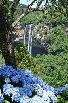 Hortencias - Canela - Rio Grande do Sul ,Brasil