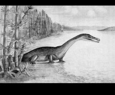 Nothosaurus by Eberhard Fraas (1862-1915) from Water Reptiles of the Past and Present 1914 United States
