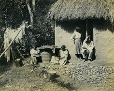 Drying Cocoa Beans and Shelling Corn