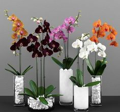 Phalaenopsis Orchids Mannequin 251 Free Obtain Phalaenopsis Orchids Mannequin 251 Free Obtain Indoor Orchids, Orchids Garden, Orchid Plants, Flowers Garden, House Plants Decor, Plant Decor, Orchid Flower Arrangements, Growing Orchids, Phalaenopsis Orchid