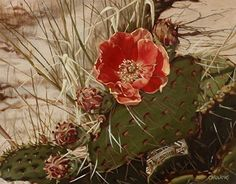 Grand Canyon Prickly Pear by Carol Amos, Alkyd, 11 x 14 Cactus Painting, Silk Painting, Succulents Painting, Painting Flowers, Cactus Flower, Flower Art, Watercolor Flowers, Watercolor Art, Desert Art