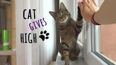 Kitty gives awesome high fives!