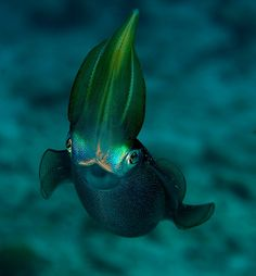 squid greeting by Allison Finch