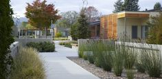 ASLA 2015 Professional Honor Award, Residential Design Category. Sweetwater Spectrum Residential Community for Adults with Autism Spectrum Disorders by Roche + Roche Landscape Architecture. Photo Credit: Marion Brenner