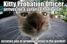 Kitty Probation Officer