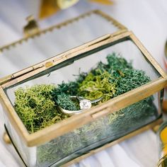 Our glass ring box with moss
