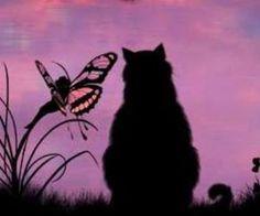 Cat and fairy   via Facebook