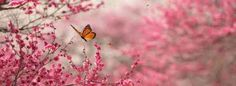 Abraham Hicks Physical Well Being Meditation *to be listened to while sitting or laying down Abraham Hicks, Beautiful Butterflies, Beautiful Flowers, 2560x1440 Wallpaper, Sending You A Hug, Original Song, Cover Photos, Beautiful Words, Beautiful Things