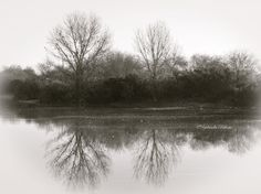 Two Trees Over A Pond in Black and White by LaPalomaCrafts on Etsy, $25.00
