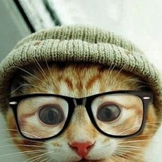 Kitty with glasses - funny www.facebook.com/pages/Focalglasses/551227474936539 www.focalglasses.com Best Vision in The World!