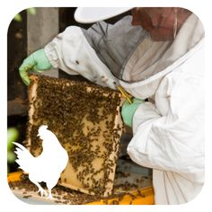 Full Day Bee Keeping  - Courses start in April, open for bookings...