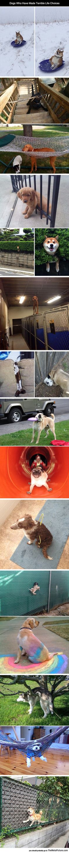 Dogs And Their Terrible Life Choices