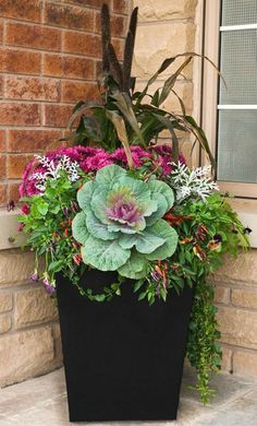 Fall container gardening flowers ornamental cabbage ornamental grasses pansie Fall container gardening flowers ornamental cabbage ornamental grasses pansies mums WELCOME. Ornamental Cabbage, Ornamental Grasses, Fall Planters, Outdoor Planters, Indoor Outdoor, Flower Planters, Autumn Planter Ideas, Fall Containers, Fall Container Gardening