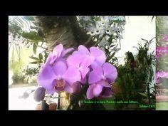 Horta, frutas e flores no jardim: Orquídeas em árvores