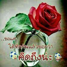 คิดถึงนะคะ Happy Sunday, Good Morning, Rose, Flowers, Plants, Bom Dia, Buen Dia, Pink, Bonjour