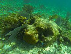 Υποβρύχια, Κοράλλια, Ψάρια, Ωκεανών