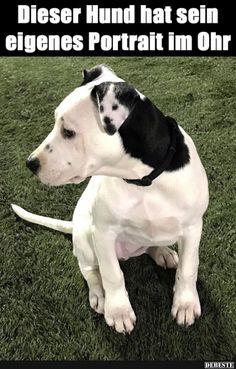 Dieser Hund hat sein eigenes Portrait im Ohr..