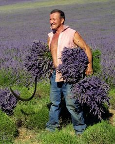 wow - can you imagine growing all that lavender and harvesting those beautiful healthy bunches?