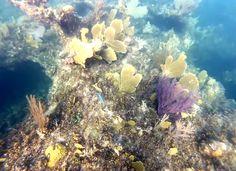 .Caicos Island Reef