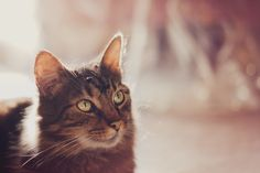 Cat in the sun by Pamela Hatmaker, via 500px