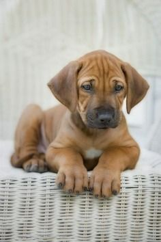 Way too cute!!!