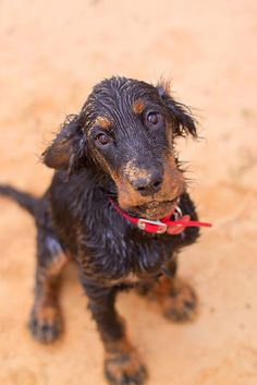 """Gordon setter """"but I don't want to go home"""""""