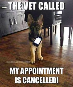 Are you looking for German Shepherd memes? Here's a collection of 20 cute and funny German Shepherd memes for your furry friend! Humor Animal, Funny Animal Quotes, Cute Funny Animals, Dog Quotes, Funny Animal Pictures, Cute Baby Animals, Dog Pictures, Funny Dog Photos, Animals Dog