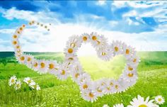 Flowers Gif, Gifs, Moving Pictures, Beautiful Gifts, Smiley, Good Morning, Happy Birthday, Hearts, Mornings