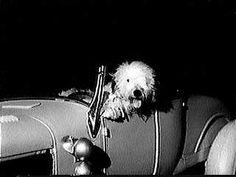 The original SHAGGY DOG (1959)