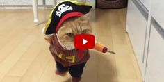 This Cat Dressed as a Pirate Is Killing It at the Halloween Costume Game