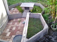 Tortoise Habitat