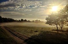 Richmond Park at dawn