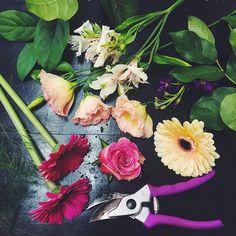 Busy days at Bloom Room💜💖 #flowers #florist #floral #flowersstore #rose #gerbera #lisianthus #alstroemeria #greenery #green #pink #purple #beautiful #bright #vibrant #colorful #work #orderflowers #instagood #instaflowers #instalikes #photooftheday #tagsforlikes #vsco #vscocam #bloomroom #kingshighway #brooklyn #newyork #nyc
