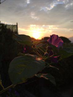 Fiore Alba garden Dreb