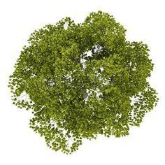 Resultado de imagem para top vegetation view