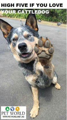 High five our dogs