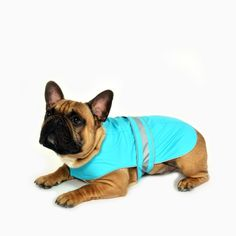 French Bulldog, Turquoise, Dogs, Clothing, Animals, Outfits, Animales, Animaux, French Bulldog Shedding