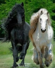 Cute Horse Pictures, Beautiful Horse Pictures, Beautiful Arabian Horses, Most Beautiful Horses, Animals Beautiful, Cute Animals, Big Horses, Black Horses, Cute Horses