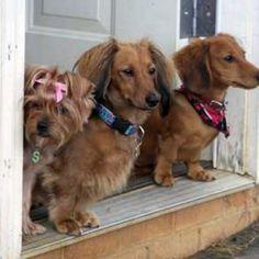 Beware: Guard dogs