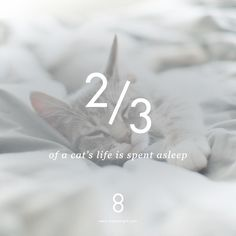 Those sleepy heads! Cats sleep 2/3 and people 1/3 of their lives. So there must be something to it! Sleep is important for us. More about why in our Kickstarter campaign! We are launching soon. #sleepsolveseverything #sleepfacts #luxuryeight #kickstarter #mindfulsleep