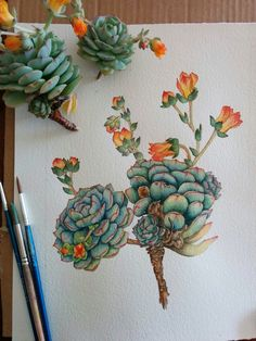 Art Only the background left to paint. Echeveria plant in flower. by waysam.Only the background left to paint. Echeveria plant in flower. by waysam. Watercolor Flowers, Watercolor Paintings, Watercolor Succulents, Succulents Art, Cactus Watercolour, Succulents Painting, Watercolor Pencil Art, Watercolor Books, Succulent Ideas