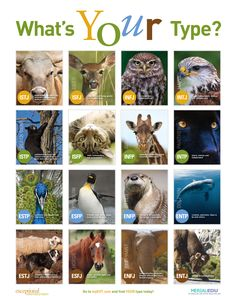 INFP~we're some cool giraffes...yeah...!