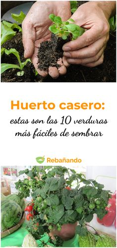 Huerto casero: estas son las 10 verduras más fáciles de sembrar Eco Garden, Home Vegetable Garden, Garden Care, Edible Garden, Balcony Garden, Indoor Garden, Garden Plants, House Plants Decor, Plant Decor