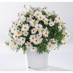 plantes et fleurs artificielles ikea premier communion deco pinterest fleurs. Black Bedroom Furniture Sets. Home Design Ideas